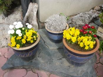 I více květináčů osázených jarními rostliny vedle sebe je efektní na pohled.